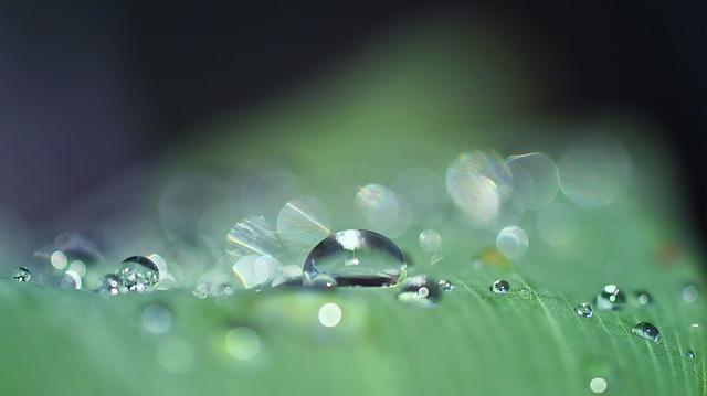 Raindrop Massage bei Menschen und Tieren / jplenio on Pixabay